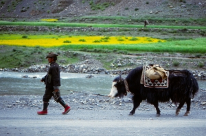 Man and Yak