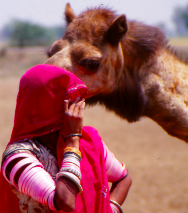 Nomads of Rajasthan, India